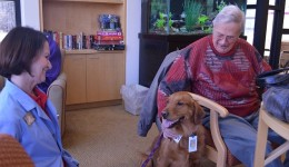 Pooches help speed up recovery