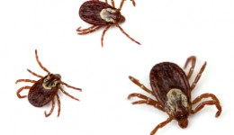 Tiny ticks pose big problems