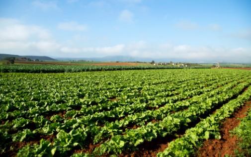 Organic crops higher in antioxidants than non-organic