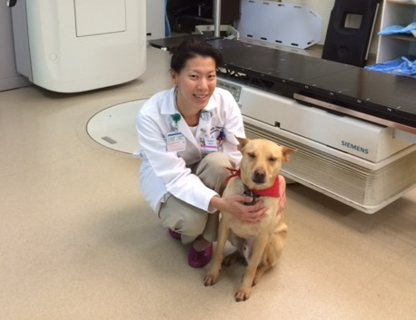 Therapy dogs helping patients with cancer