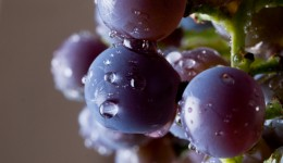 Can eating grapes improve your vision?