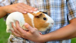 Animals ease anxiety for kids with autism