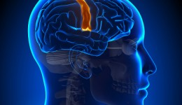 Male and female brains age differently, study finds