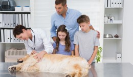 Death of a family pet? Here's how to break it to your child