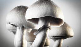 "Can ""magic mushrooms"" treat depression?"