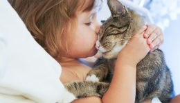 Rising concern for cat scratch disease