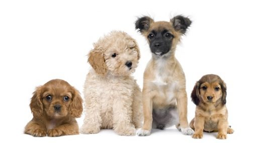 Can puppies help your marriage?