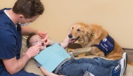 Furry friends at the dentist?