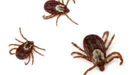 5 myths about ticks
