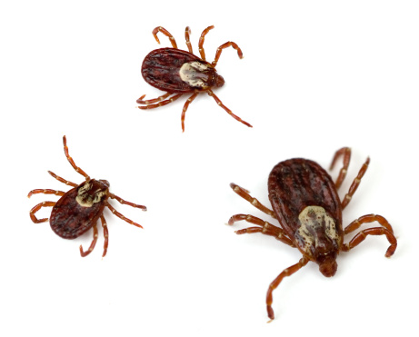 5 myths about ticks